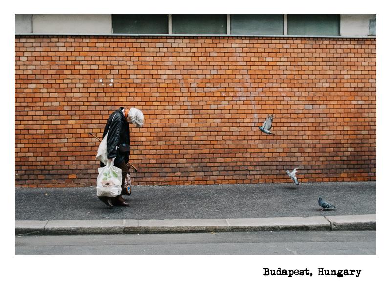 Budapest-Gray-Hair-Birds
