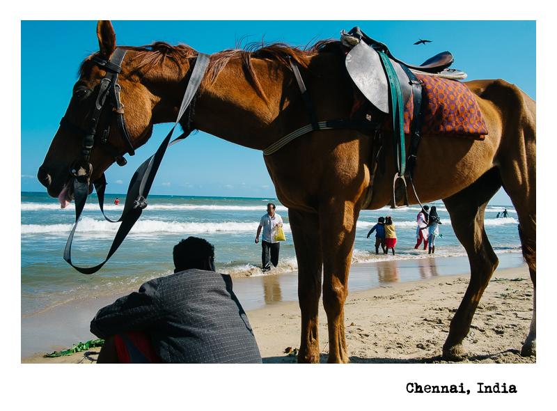 Chennai-Horse