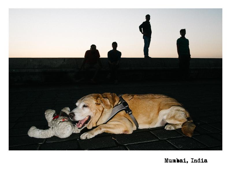 Mumbai-Flash-Dog